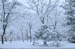 ホイワイト庭園