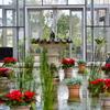 12月のグラスハウス