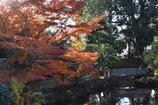 旧長谷川邸 庭