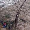 奥千本には桜と雪があった
