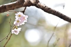 春遠からじ