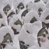 千体地蔵 雪の日version