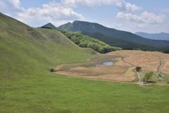 今年の曽爾高原