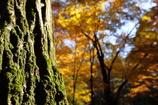 苔映える秋