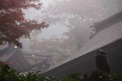 天然フォギーの大矢田神社