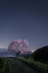 野平の一本桜と北斗七星