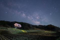 桜星景~小沢の桜