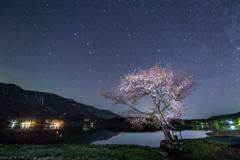 桜星景~青木湖の桜
