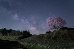 野平の一本桜と天の川