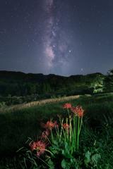 彼岸花咲く棚田の星空