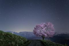北アルプスと桜の星景写真