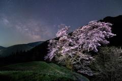 桜星景~駒つなぎの桜