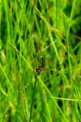 湿原の生き物~追われるもの♀