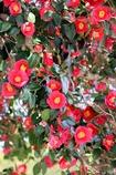 春の華やぎ