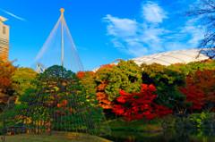 碧空の下で雪吊りと東京ドームと紅葉 (小石川後楽園)