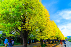 カナールの銀杏並木 (国営昭和記念公園)