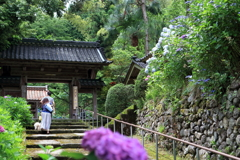 紫陽花寺の涼