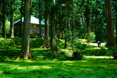 苔の絨毯〜白山平泉神社