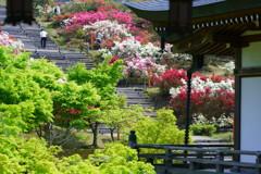 新緑とツツジの階段〜倶利伽羅不動寺鳳凰殿