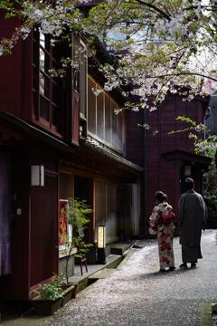 桜散る主計町茶屋街