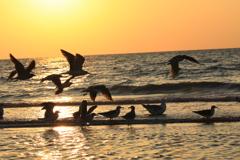 夕暮れの千里浜海岸