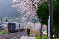 能登無人駅の桜~西岸駅