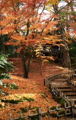 過行く秋の兼六園
