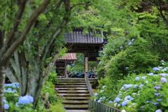 紫陽花寺山門