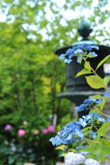 紫陽花寺のお庭
