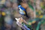 幸せを呼ぶ青い鳥-Ⅳ