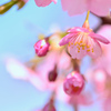 spring wind-Ⅲ