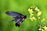 昆虫達の季節-Ⅴ