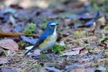 幸せを呼ぶ青い鳥-Ⅱ