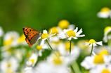 昆虫達の季節-Ⅵ