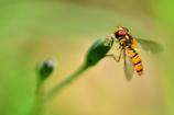 昆虫達の季節-Ⅰ