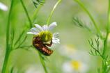 昆虫達の季節-Ⅶ