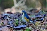 幸せを呼ぶ青い鳥-Ⅰ