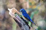 幸せを呼ぶ青い鳥-Ⅵ