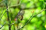 昆虫達の季節-Ⅳ
