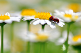 昆虫達の季節-Ⅱ