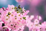 桜に日差し