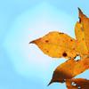 枯れ葉と空