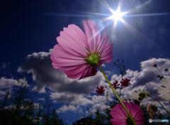 輝く君へ・秋桜
