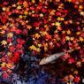 落葉の時・祭