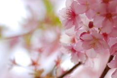 曇りの日、気分は春めいて