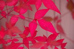 越後長岡の秋-3