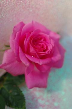 花言葉...愛を持つ