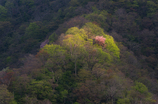 移り行く山の色彩