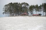 鎮守の森に春の雪