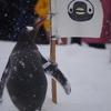 ペンギンの雪中さんぽ